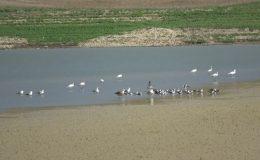 Yarseli Göletinde sular çekildi