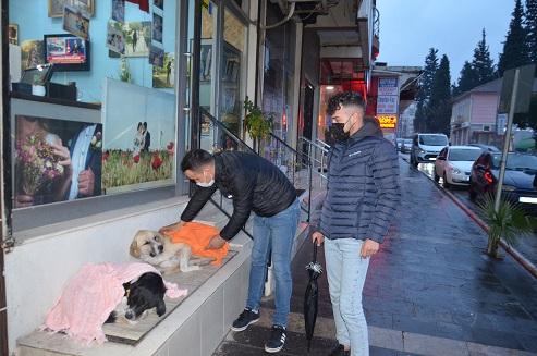 Evden getirdiği şallarla sokakta yatan köpeklerin üzerini örttü
