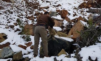 Hatay'da yaban hayvanları için doğaya 300 kilo yonca bırakıldı