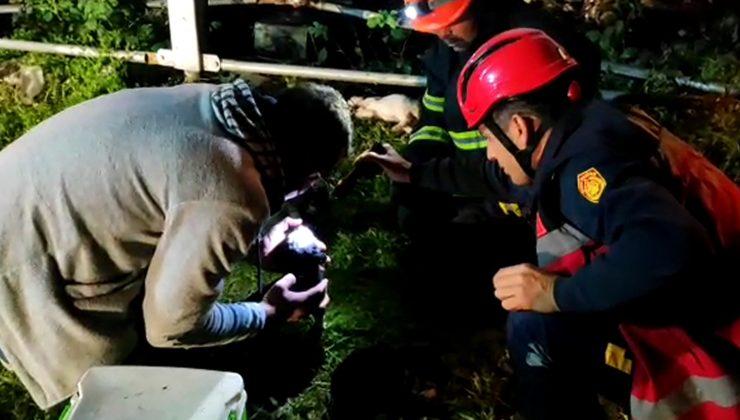 Yaralı yavru köpekler ölmekten kurtarıldı