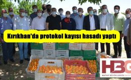 Kırıkhan'da protokol kayısı hasadı yaptı