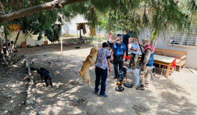 Arsuz Jandarması sokak hayvanlarını besledi
