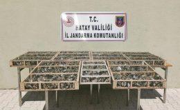 Hatay'da 3 bin 754 adet saka kuşu ele geçirildi