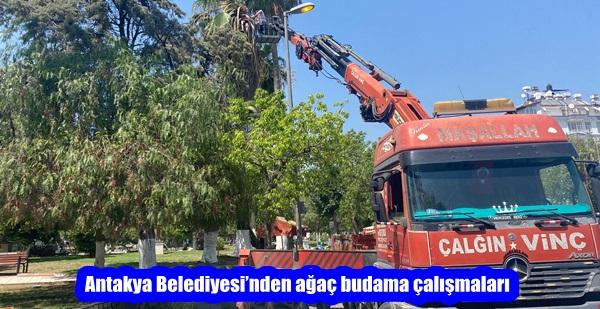 Antakya Belediyesi'nden ağaç budama çalışmaları
